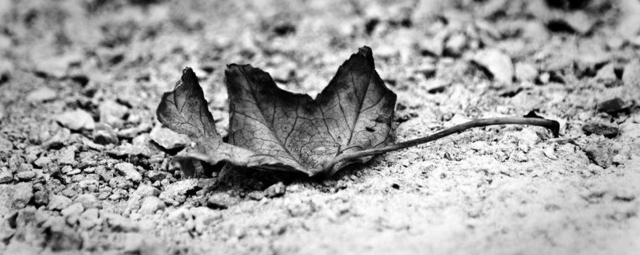 Foto de folho seca em preto e branco